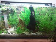 Aquarium 8o 40 45 120