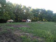Offenstall Pferde