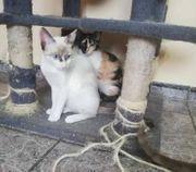 Schwesterherzen TAMY und SASHA FFM