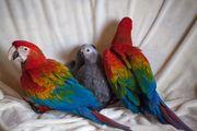 Bei Papageien Park