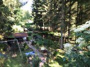 Lust auf Waldbaden Traumhafte Location