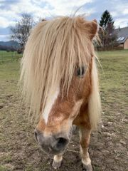 Reiterin sucht Pony