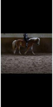 Reiter sucht Pferd