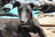 Salma sucht dringend eine Pflegestelle