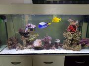 Aquarium 250L mit Zubehör und