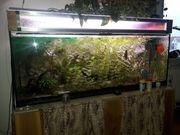 450 l Aquarium