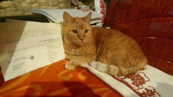 Katze Mia wird vermisst