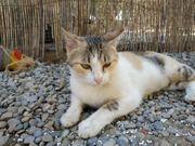 Katze Rita sucht ein Zuhause