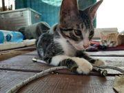 Breeze verschmuster Kittenjunge ca 4