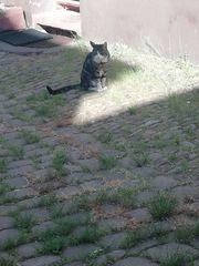 Katze Francis füttern in Mannheim -