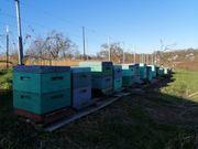 Bienenvölker auf 10 Waben Zander