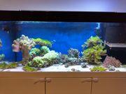Meerwasser Korallen Korallenableger Fische