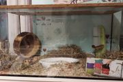 Terrarium, Hamster Heim