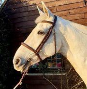 Absolutes atemberaubendes irisches Sportpferd