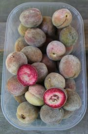 rotfleischiger Weinbergpfirsich einheimische leckere Pfirsich-Früchte