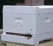 Bienen abzugeben 11 Waben Volk
