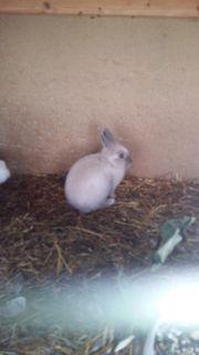 Kaninchen aus eigener Zucht