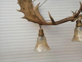 Lampen - Geweihlampe aus 4 SDamwildschaufeln