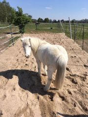 Stellplatz in Ponygesellschaft