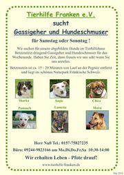 Tierhilfe Franken e V sucht