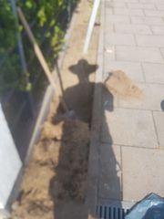Garten - und Haus - Dienstleistungen