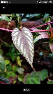 Tropische Terrarium Pflanzen