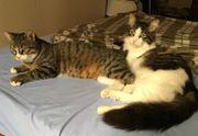 Tierschutz-kuscheliges Katzenpärchen