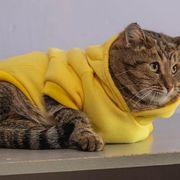 Katze sucht Zuhause