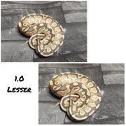 1 0 Lesser