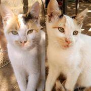 Katzenmädchen Kira und Melly möchten