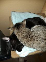 2 Katzen Weiblich