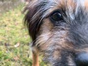 Hundebetreuung in Erlangen