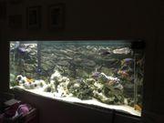 Komplettes Aquarium 180x65x73cm