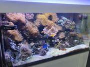 Meerwasser Aquarium - kompletter Inhalt