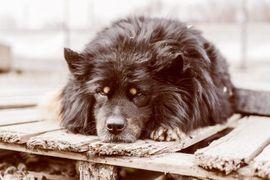 Hunde - HENRICH - der Kuschelprinz liebt Kinder