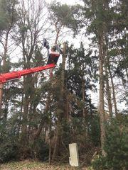 Baumfällung auch an unzugänglichen Orten
