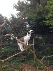 Katzen entlaufen / vermisst