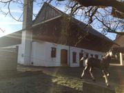 Boxen für Pferde- Ponys Einsteller