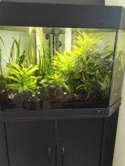 Eck Aquarium mit Eheim Aussenfilter