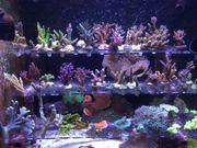 Jede Menge Korallenableger auch seltene