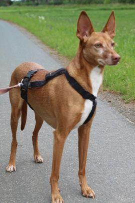 Dobby sucht Paten: Kleinanzeigen aus Kasendorf - Rubrik Hunde