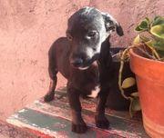 Lupe - Welpe aus dem Tierschutz -
