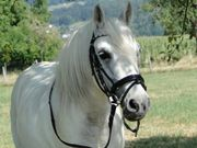 Biete Reitbeteiligung Pony