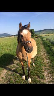 Suche Pflegebeteiligung für liebe Ponystute