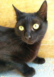 ISIDORA - Liebes Katzenmädchen sucht Familie