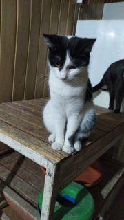 Katzenmädchen Amy sucht sein Schmuseplätzchen