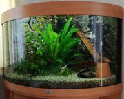 Aquarium mit passendem Unterschrank