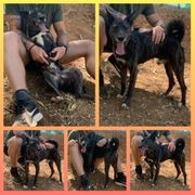Hund Rüde Henry 4 Jahre