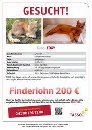 Roter Kater Katze vermisst