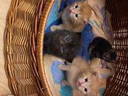 3 Kitten können bald ausziehen